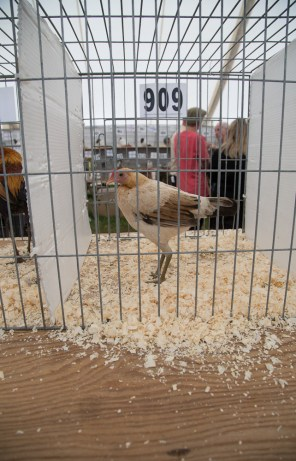 Driffield Show-6623