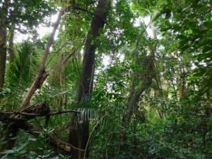 Bendigo Nature Reserve 2