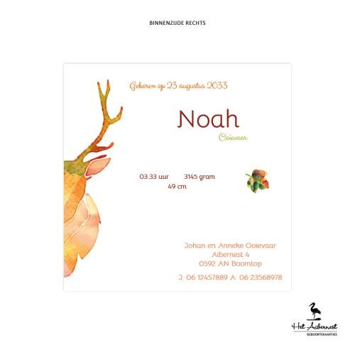 Noah_web-br