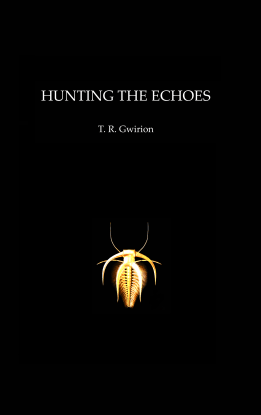 Hunting the Echoes