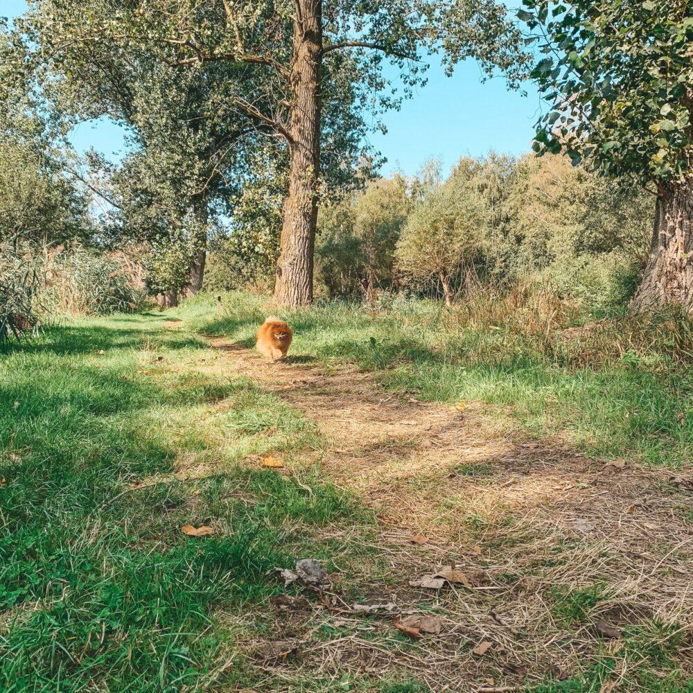 Het Gezinsleven - Lifestyle - Sporten - Wandelen is gezond - hond komt aanrennen