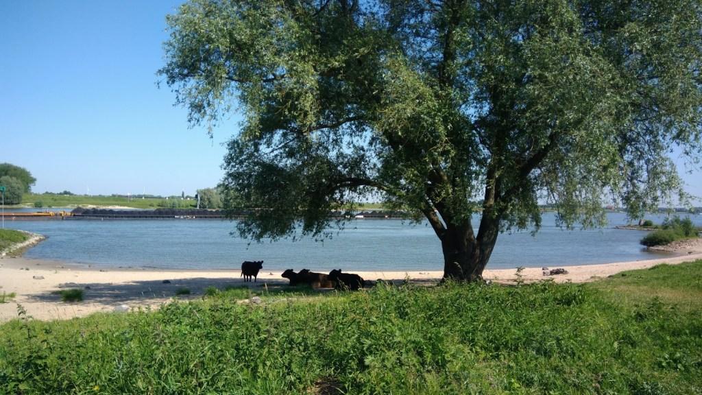 Op de foto is de Ooijpolder in Nijmegen te zien. Er is uitzicht op de Waal en bij het strand liggen wilde paarden. Op de waal vaart een vrachtschip voorbij.
