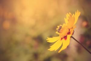 843x562 bloem:bij