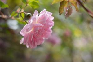 mindfulness natuur