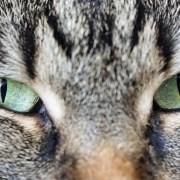 Cat's eyes staring