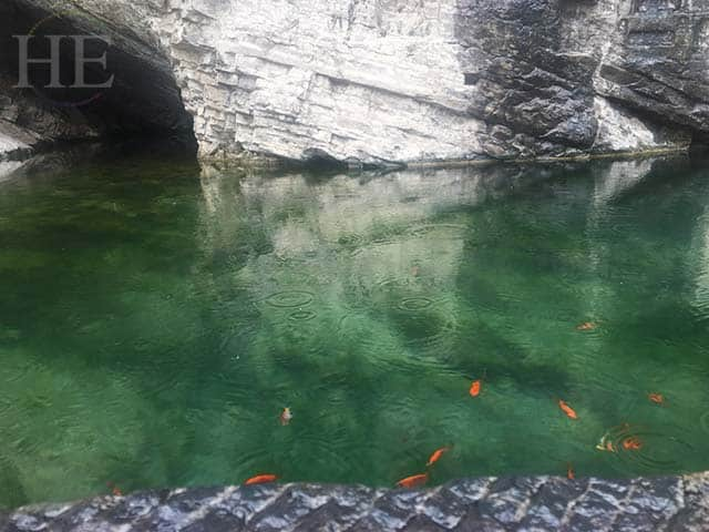bright koi fish in verdant green waters at longmen grottoes in luoyang china