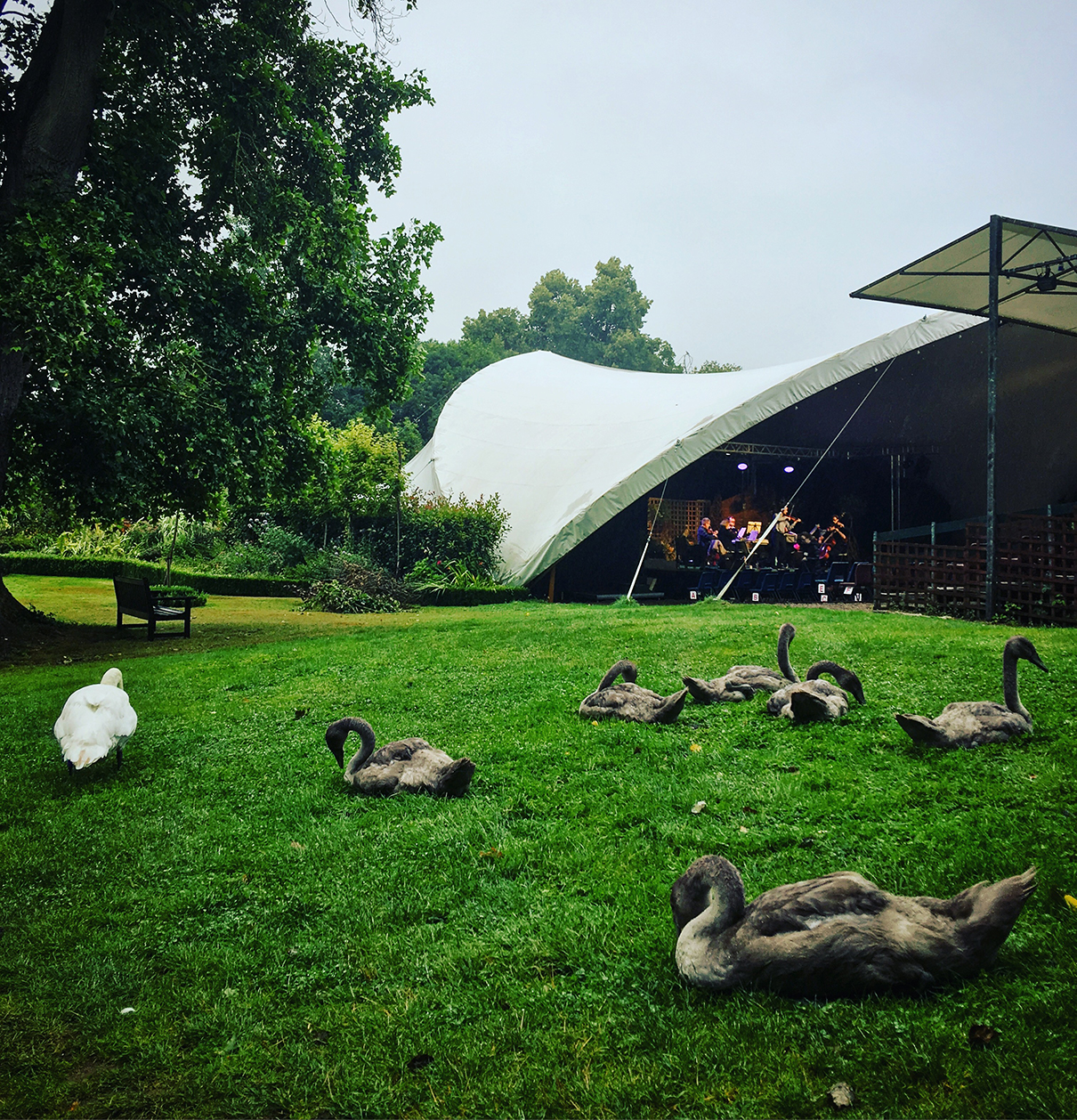 Classical_Swans