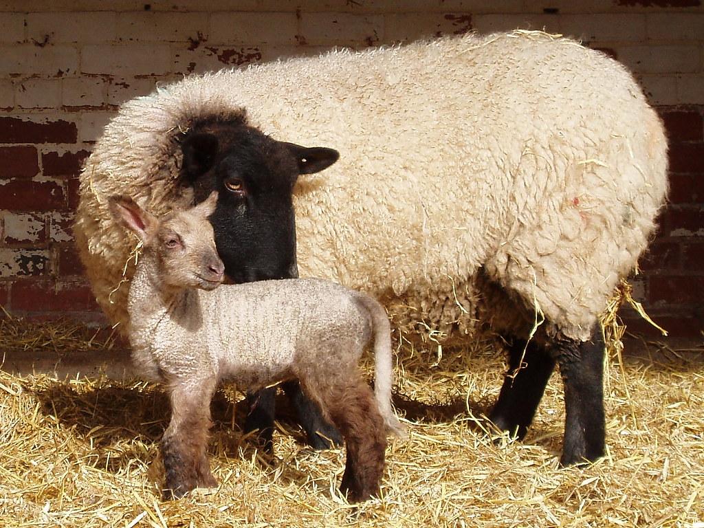 Firstborn?
