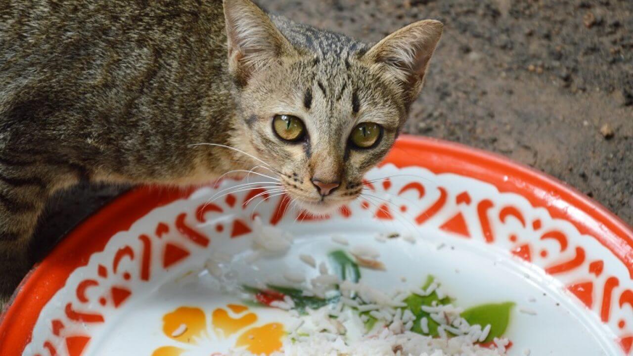 Makanan Untuk Kucing Kampung Agar Sehat Dan Berbulu Lebat