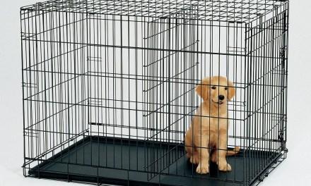 Cara Membersihkan Kadang Anjing