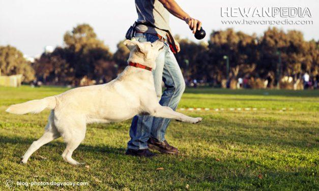 Tips Bagaimana Cara Bermain dengan Anjing