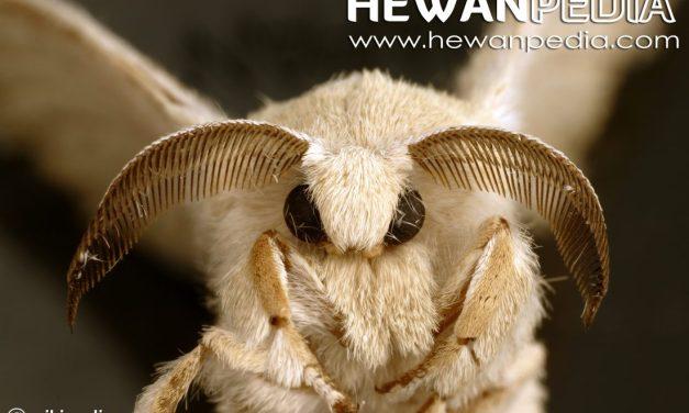 7 Jenis Serangga Yang Membantu Proses Penyerbukan Selain Lebah dan Kupu-Kupu