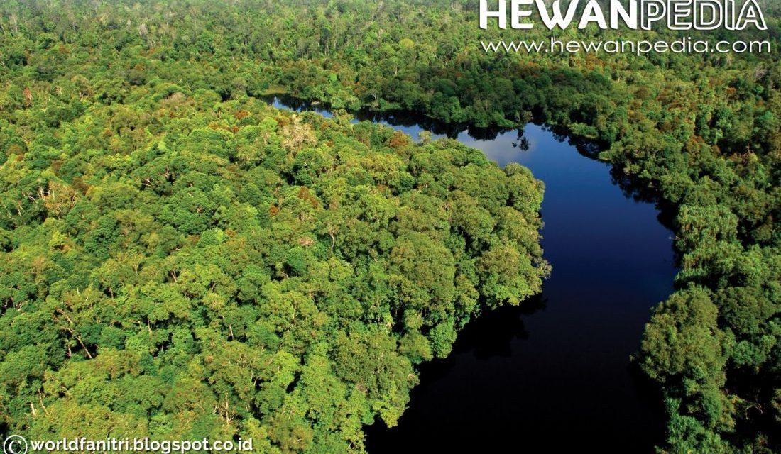 Pengertian Hutan, Cagar Alam, Suaka Margasatwa