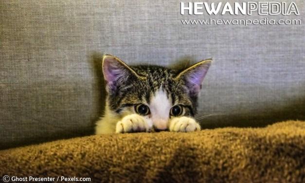 10 Cara Melatih Kucing Untuk Pemula