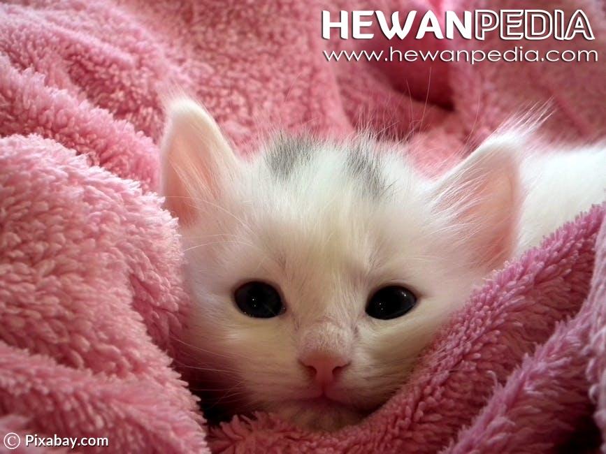 60 Inspirasi Nama Untuk Kucing Peliharaan Hewanpedia