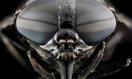 Foto Lalat