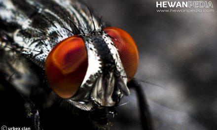 Cara Mengatasi dan Penyebab Datangnya Lalat