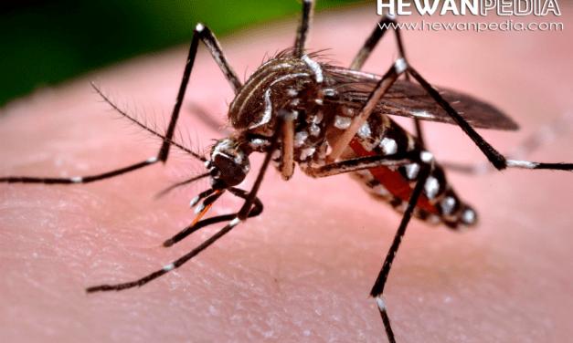 7 Cara Melindungi Keluarga Anda Dari Virus Zika