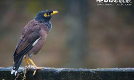 Karakteristik Burung