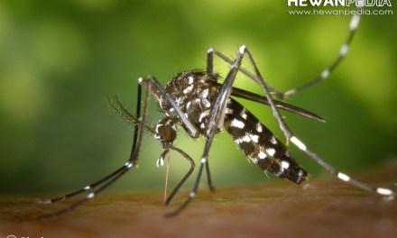 3 Serangga yang Sering Ditemui dan Bisa Membunuhmu
