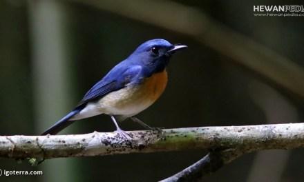 8 Hal Penting dalam Pemilihan Bakalan BurungTledekan