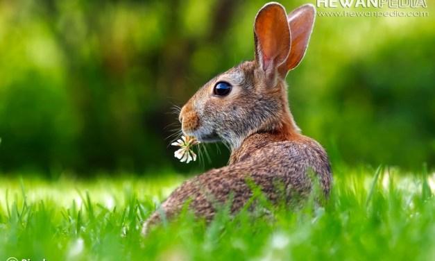 10 Ciri Fisik Kelinci yang Sehat