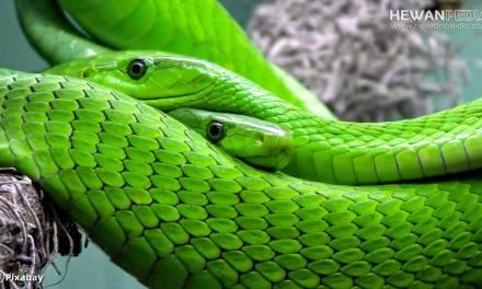 Pengertian Reptil dan Berbagai Faktanya