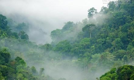 Hutan Hujan Tropis beserta Fakta dan Informasi Lengkapnya