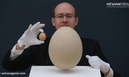 Jenis Telur Burung dari Terkecil hingga Terbesar di Dunia