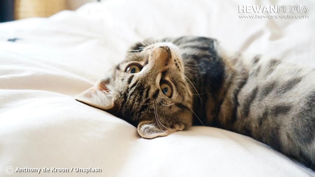Berbagai Cara Melatih dan Menjinakan Kucing agar Nurut dan Pintar