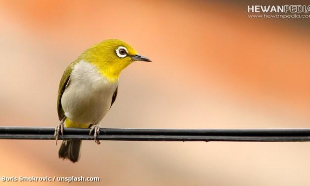3 Faktor Utama Penentu Harga Burung Berkicau di Pasaran