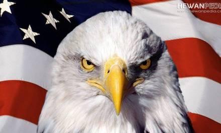 Alasan Mengapa Elang Botak menjadi Lambang Negara Amerika
