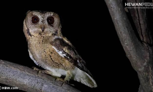 Mitos Jawa atau Kejawen Arti Burung Masuk Rumah menurut 7 Jenis Burung
