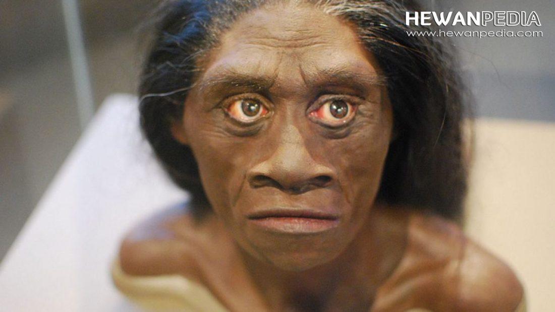 Mengenal Meganthropus Paleojavanicus beserta Ciri-cirinya