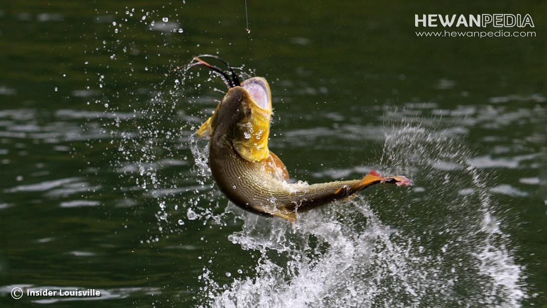 Doa Terbaik Untuk Mancing Ikan Sebelum Dan Pada Saat Mancing Hewanpedia