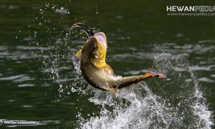 Doa Terbaik untuk Mancing Ikan Sebelum dan Pada saat Mancing