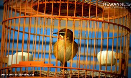 5 Langkah Penting dalam Cara Membersihkan Sangkar Burung