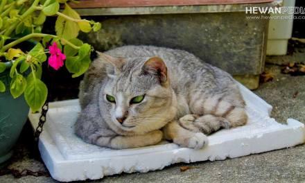 6 Cara dan Tips Membantu Kucing agar Cepat Beradaptasi dengan Rumah Baru