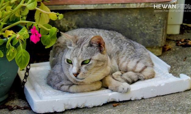 6 Cara Alami Mengusir dan Mencegah Kucing Liar Masuk Rumah