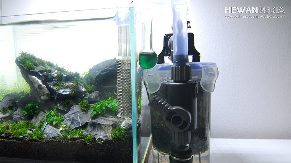 Canister Filter aquascape