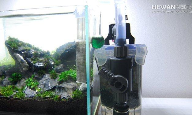 Cara Memilih Filter Aquascape yang Baik dan Sesuai dengan Kebutuhan