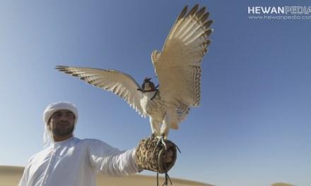 7 Alasan Kelebihan Memelihara Burung