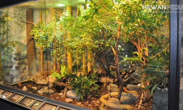 6 Langkah Mudah Cara Membuat Terrarium untuk Memelihara Reptil