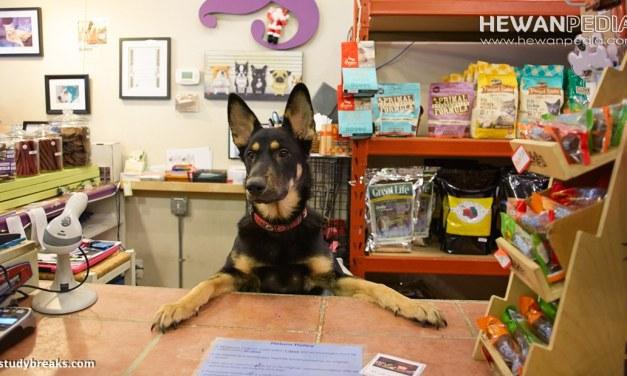 6 Langkah Mudah Cara Mendirikan Toko Hewan Peliharaan atau Pet Shop