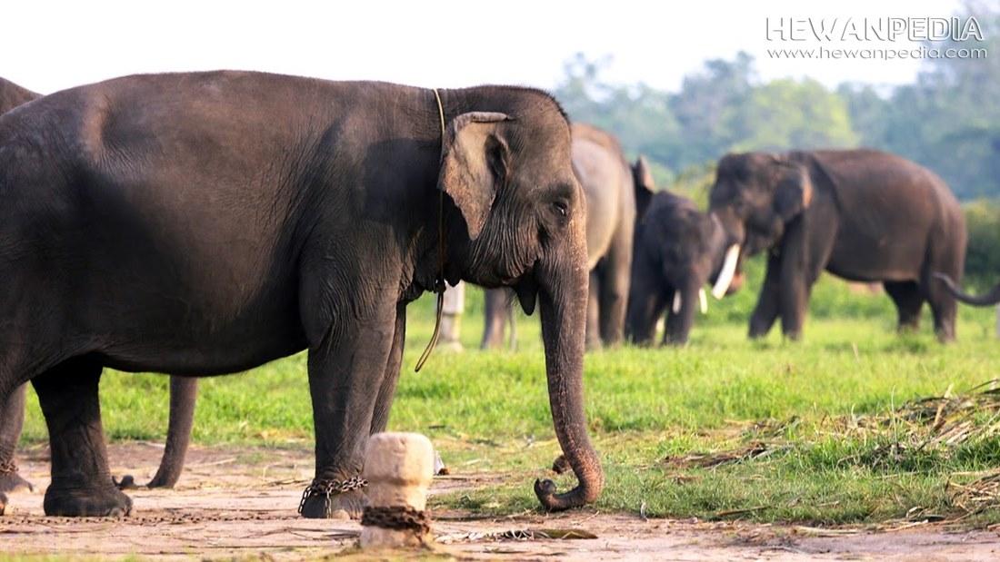 11 Taman Nasional di Pulau Sumatera serta Flora Fauna yang dilindungi