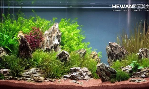 3 Jenis Moss atau Lumut paling Cantik dan Populer untuk Aquascape