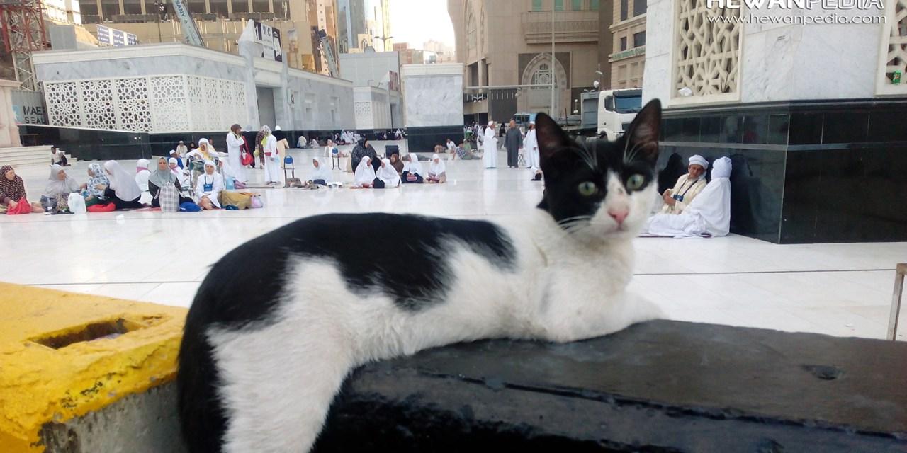 50 Inspirasi Nama Kucing Peliharaan dari Bahasa Arab dan Islam
