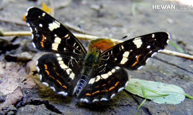 2 Arti Tanda Peruntungan Kupu-kupu Masuk Rumah, Fakta atau Mitos?