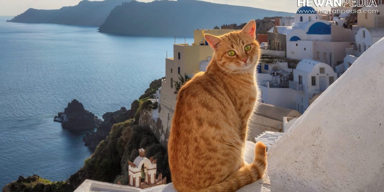 50 Inspirasi Nama Kucing Peliharaan Dari Mitologi Yunani Hewanpedia