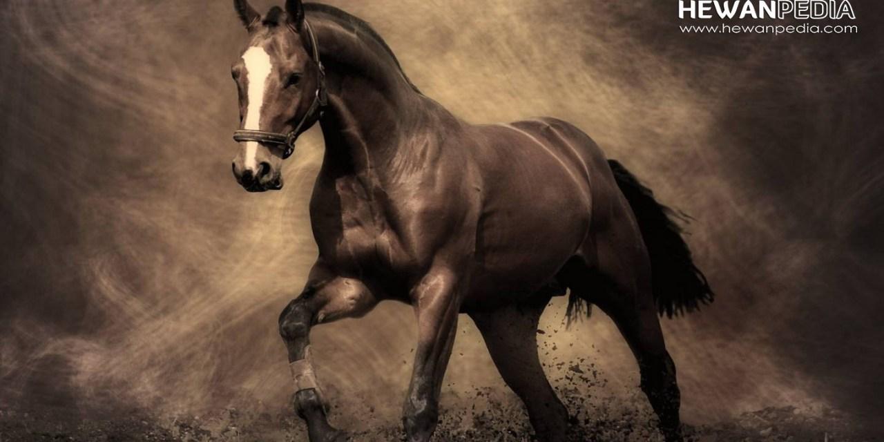 25 Arti Tafsir Bertemu Kuda dalam Mimpi menurut Primbon Jawa